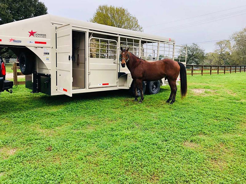 a horse standing by a horse trailer